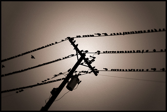 7th - Birds On A Wire