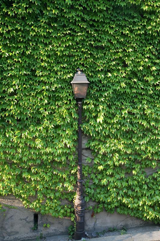 Street lamp in foliage