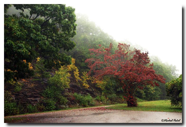 IMG_1063 Tree.jpg