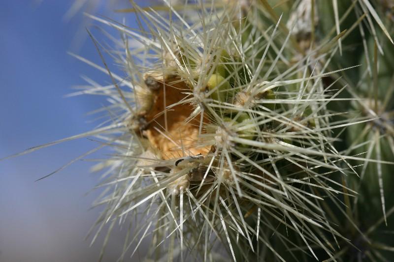High Desert Cactus