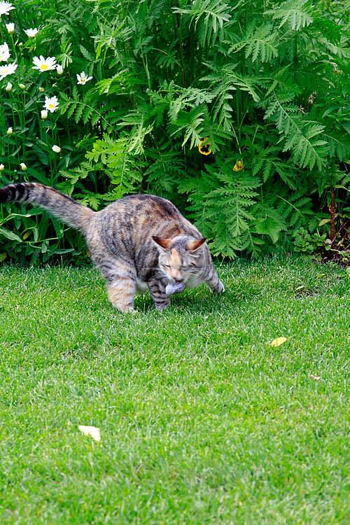 _MG_2130 cat and mouse.jpg