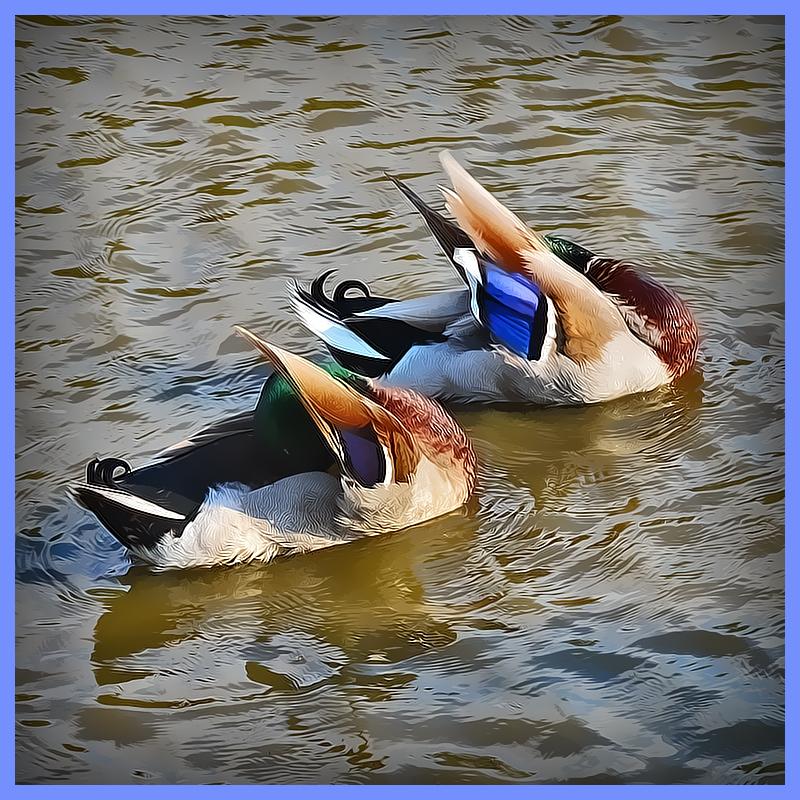 Lafreniere Park Synchronized Swimming Green Heads