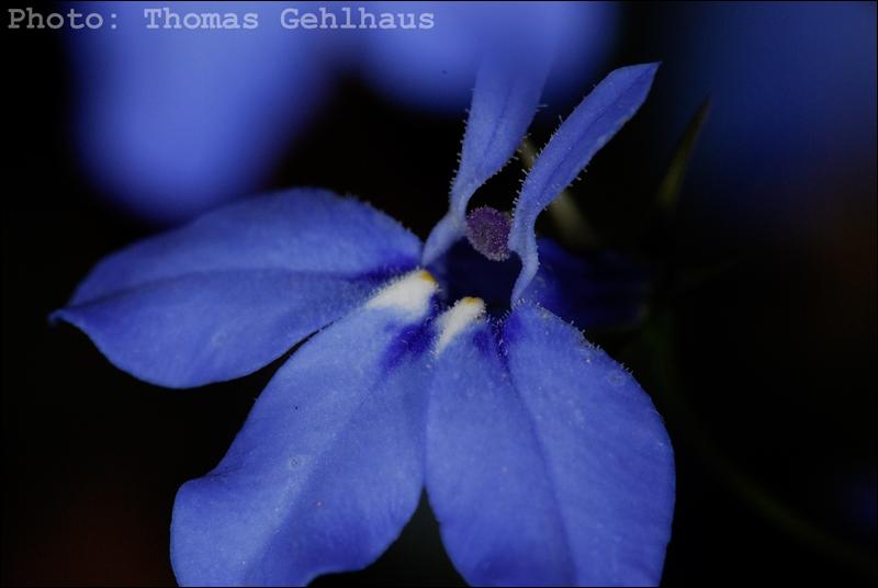 Flower of some kind