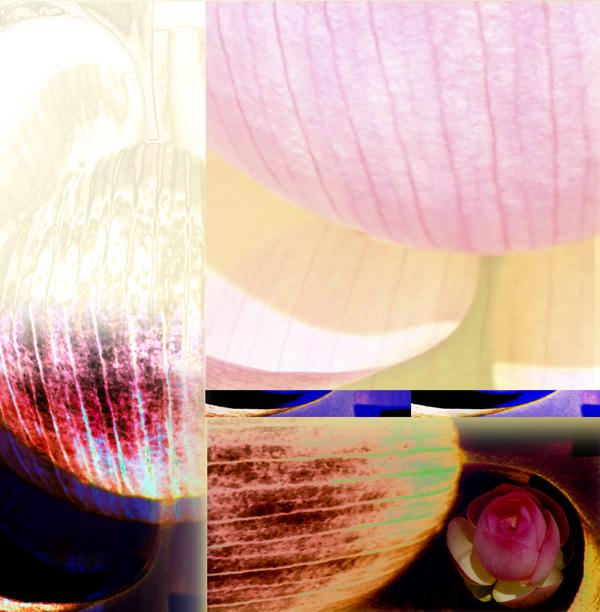 Lotus Variation