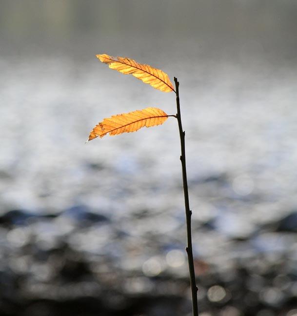 Last Leaves of Summer