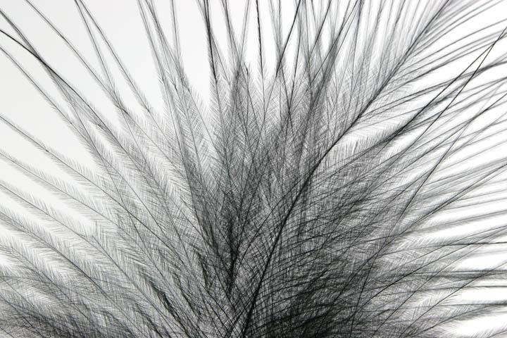 Marabou Feather.jpg
