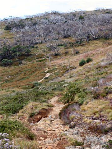 Toward Dibbins Hut