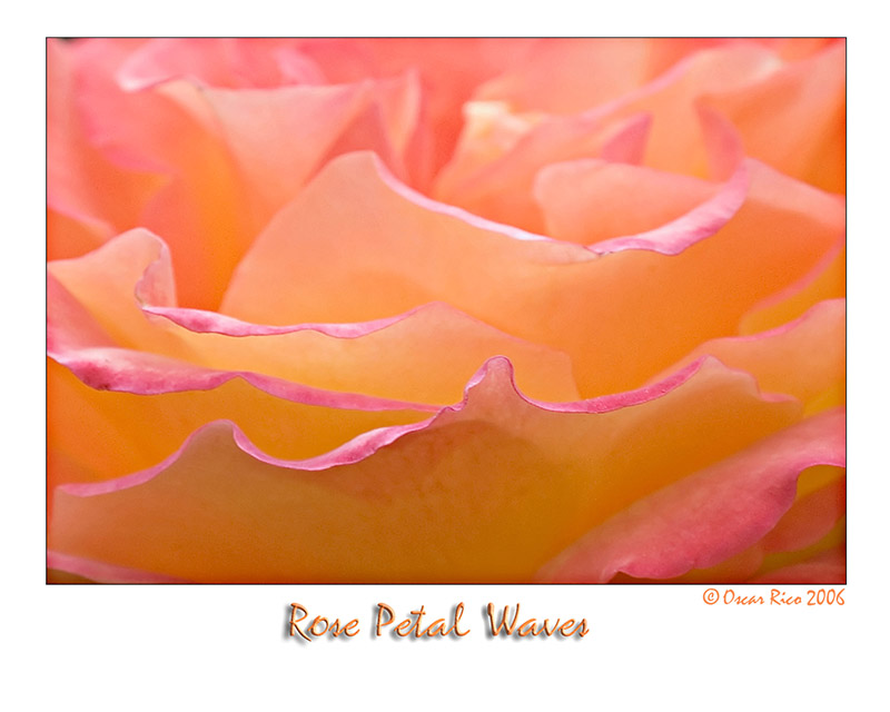 Rose Petal Waves.jpg