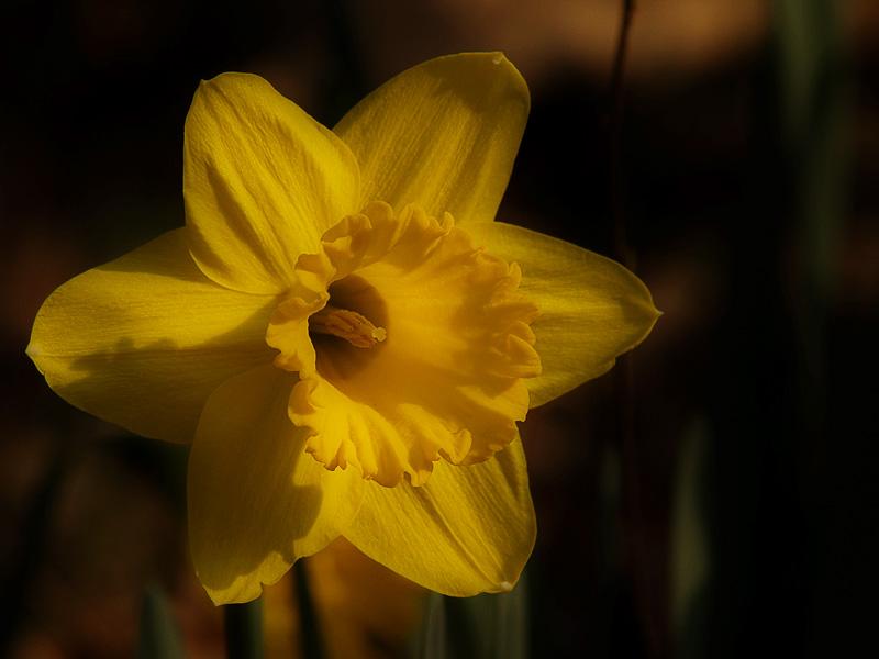 Yellow Spring1.jpg