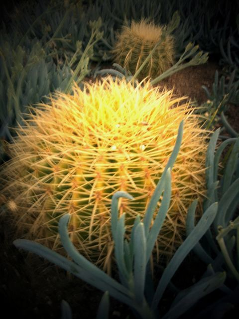 Going Green: Cactus in Place of Grass