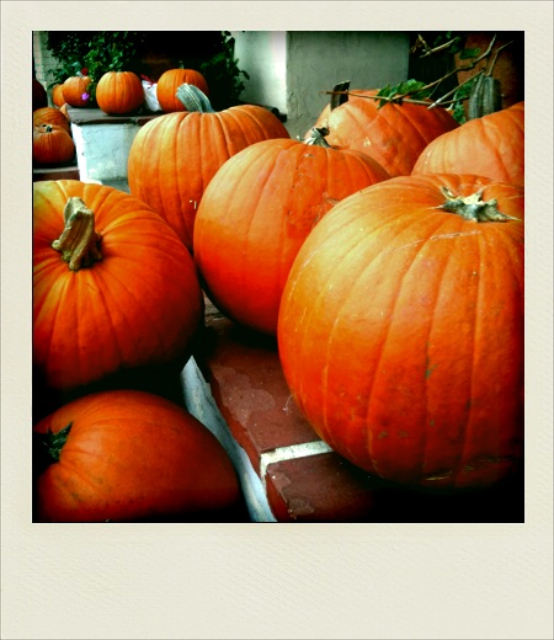 Pumpkins, Lee Vining, California