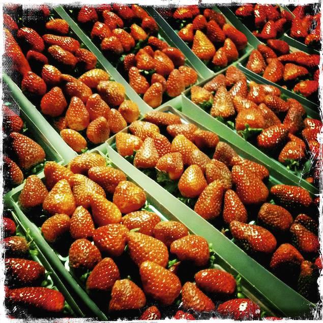 Strawberries, San Luis Obispo