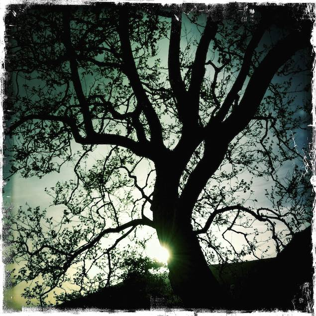 Oak Silhouette, Irish Hills