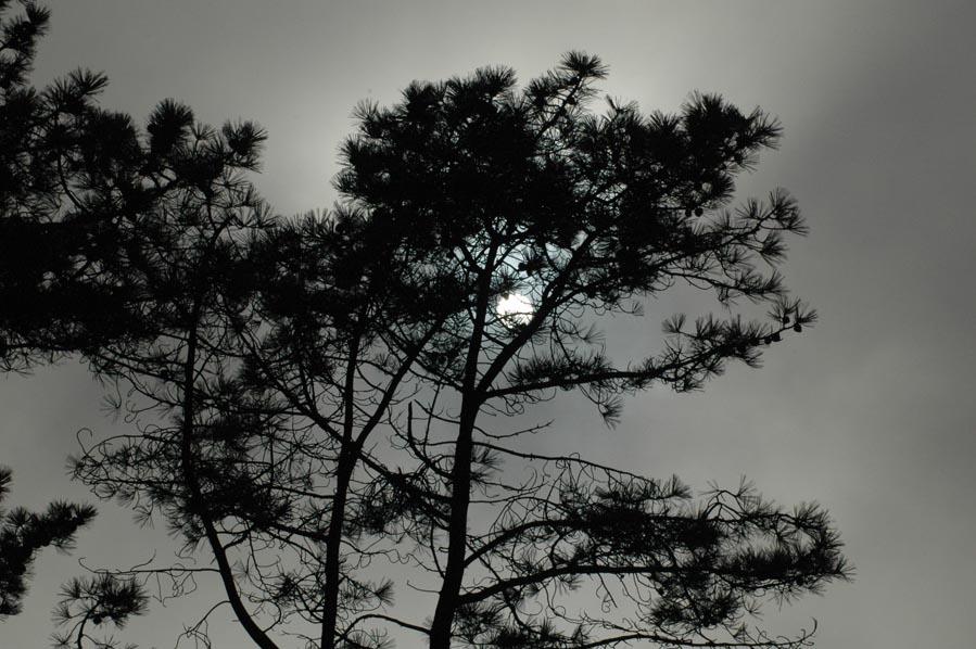 November 25, 2005 -Torrey Pines, Fog and Sun