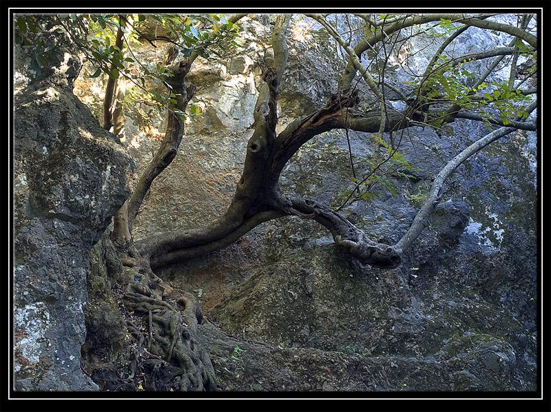 Tree slanted downwards