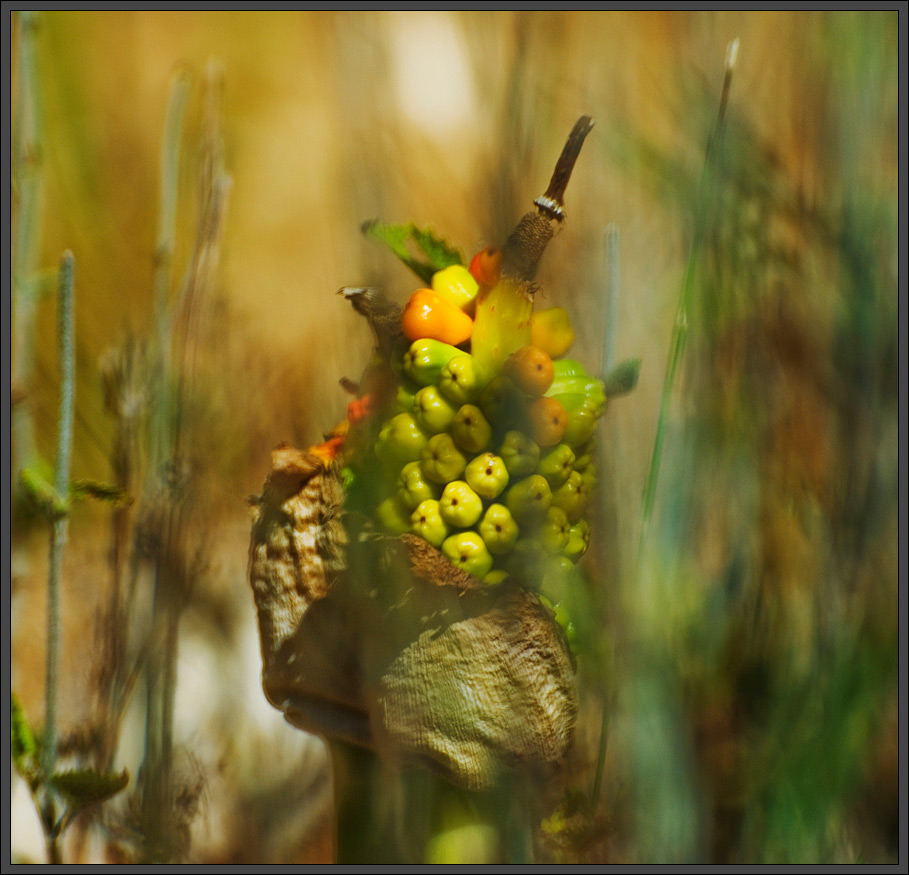 Colorful stalk in the field