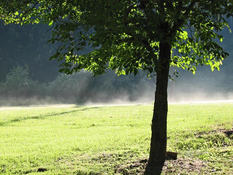 Morning mists_1