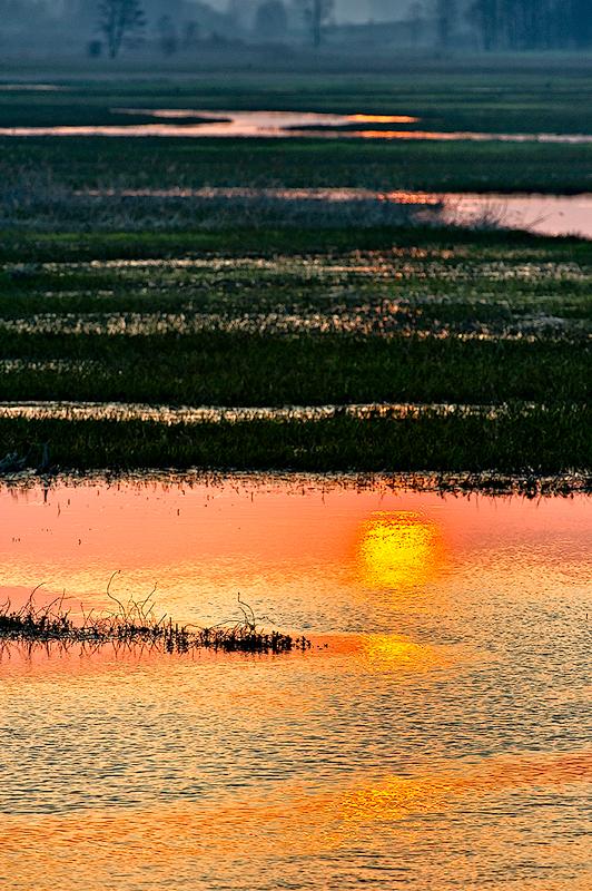 Sunrise On Biebrza River