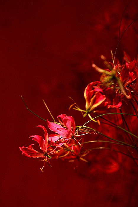 A Dream in Red *