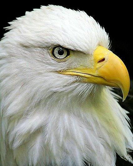 Old Eagle Eye