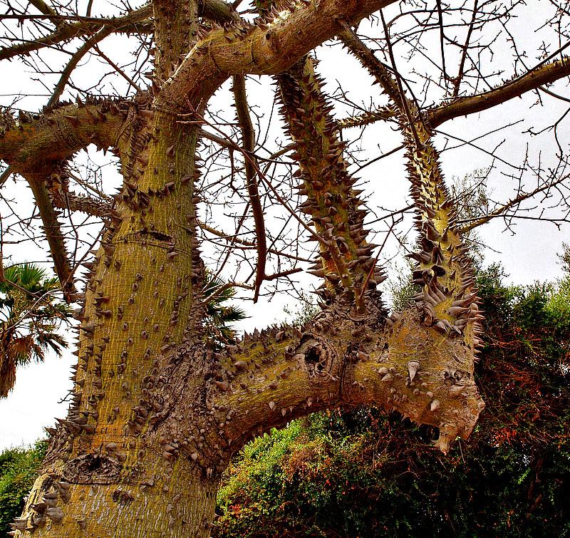 tree spikes2_ed.jpg