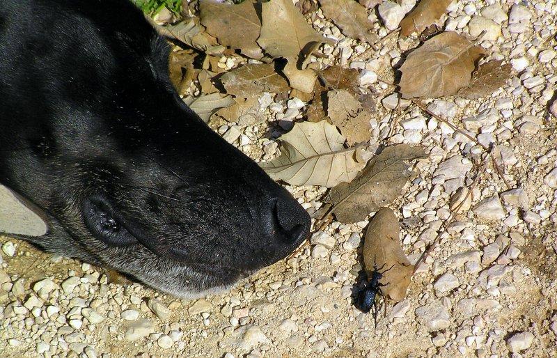 bat yaar dog and bug 1-31-2006 12-41-18 PM 2288x1712.JPG