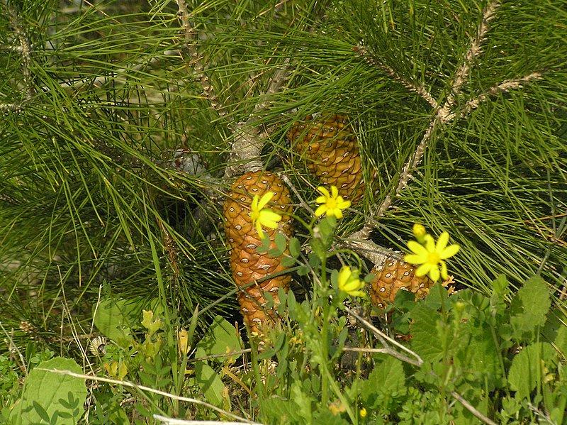 pinecones2 1-30-2006 3-07-46 PM 2288x1712.JPG