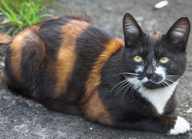 beeline cat.jpg