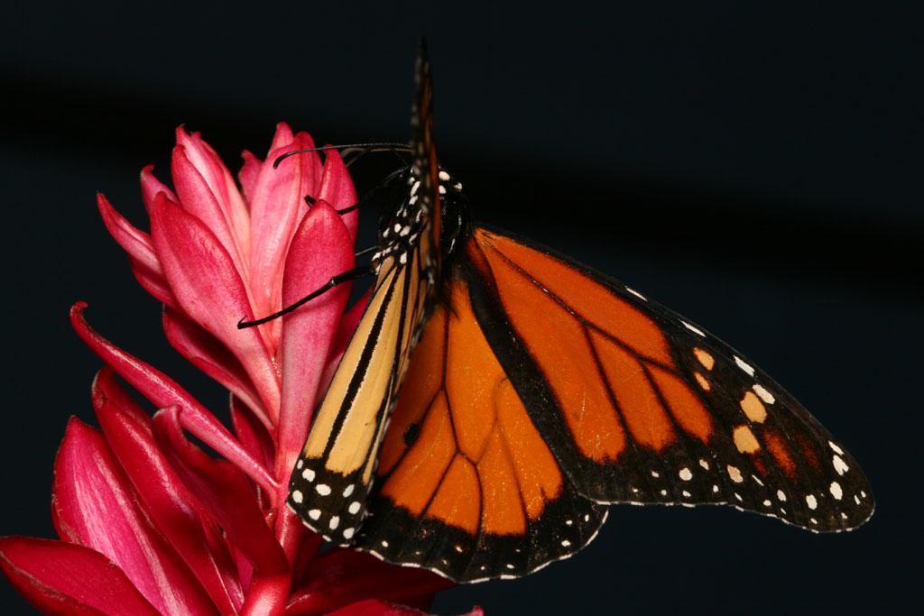 St. Maarten - Butterfly Farm