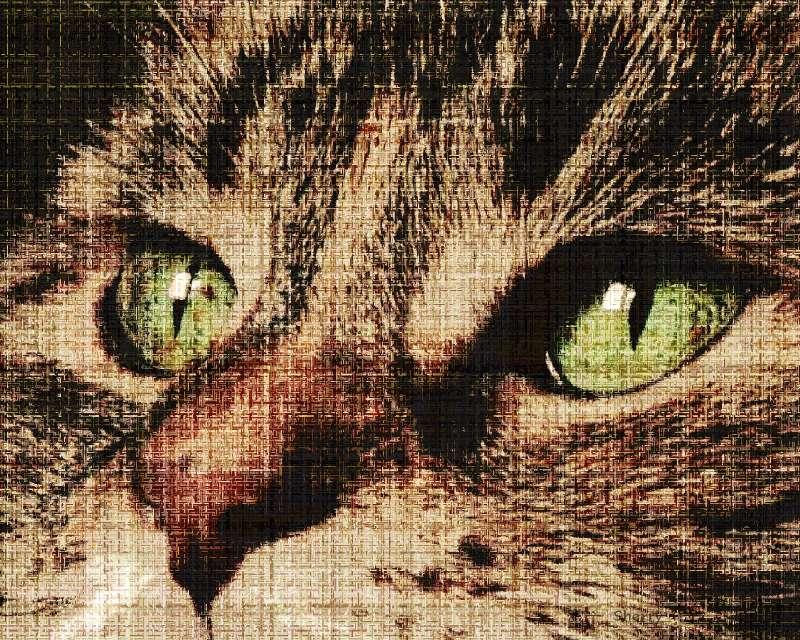 daisy337-canvas.jpg