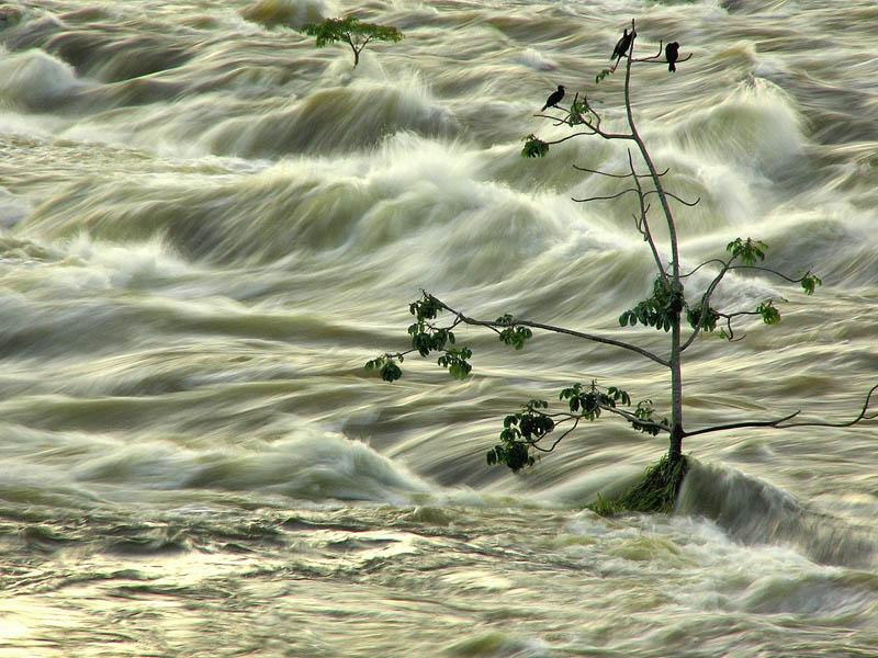 Grown river / Rio crecido