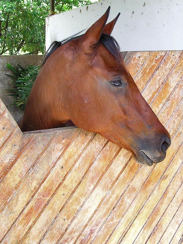 Horse in El Manantial / Caballo en El Manantial