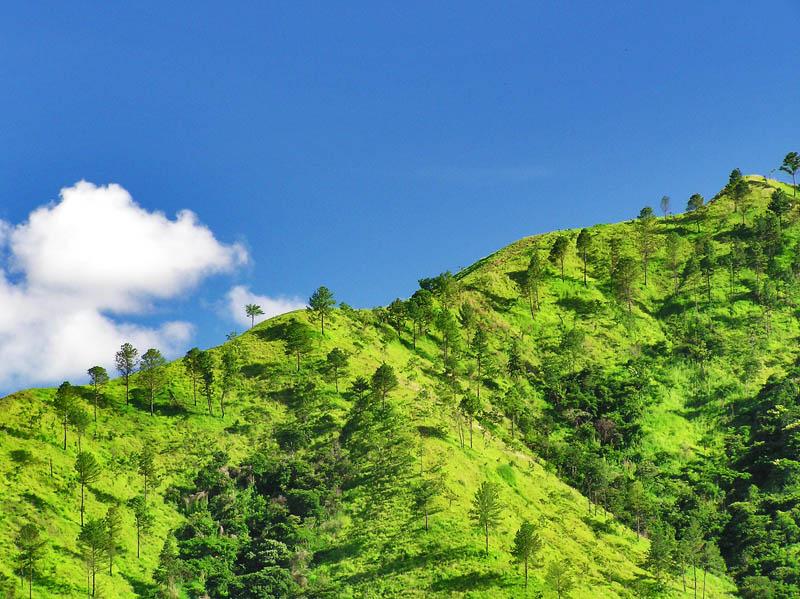 Sunlight on the hill / Luz de sol en la colina