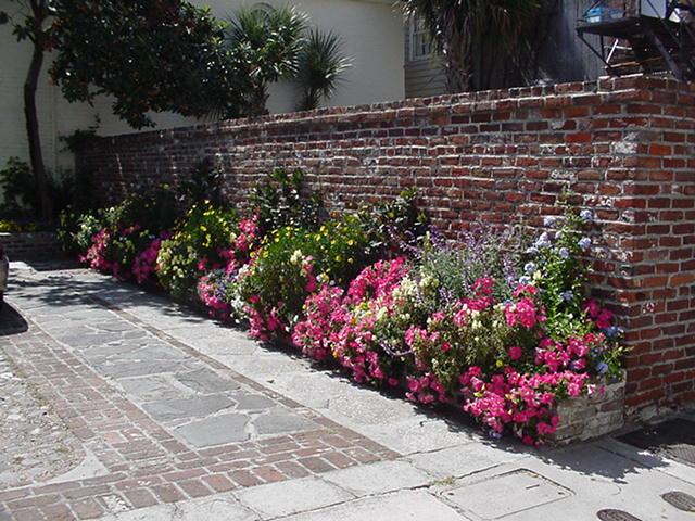 Charleston driveway