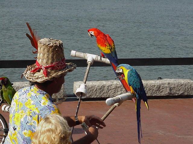 Savannah waterfront entertainer
