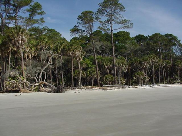 Hunting Island beach 2