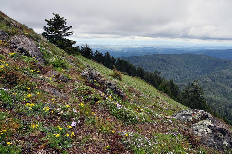 Marys Peak hillside meadow #2