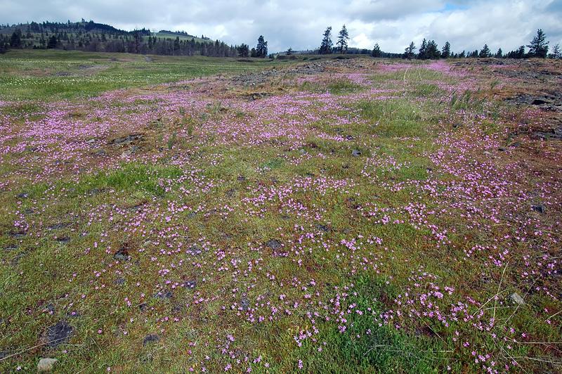 Catherine Creek, Upper Field #4