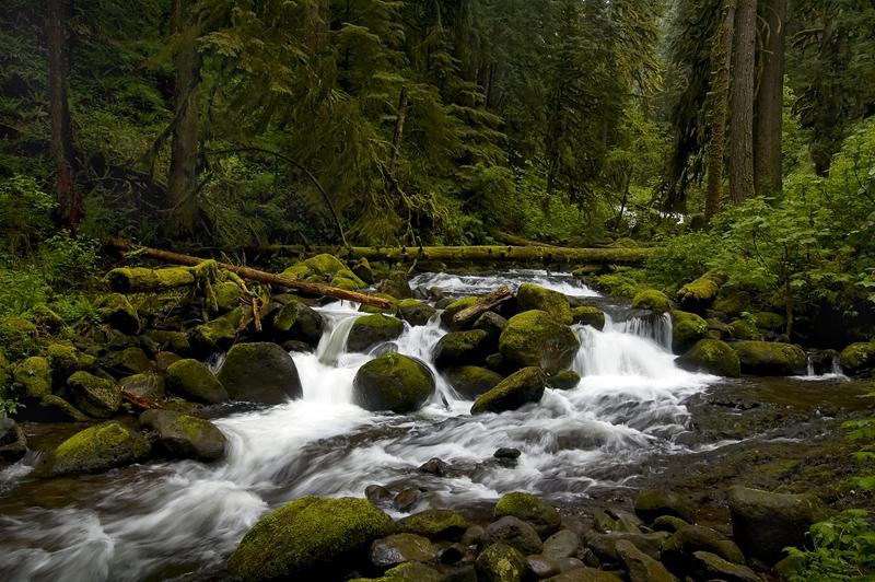 Multnomah Creek #5