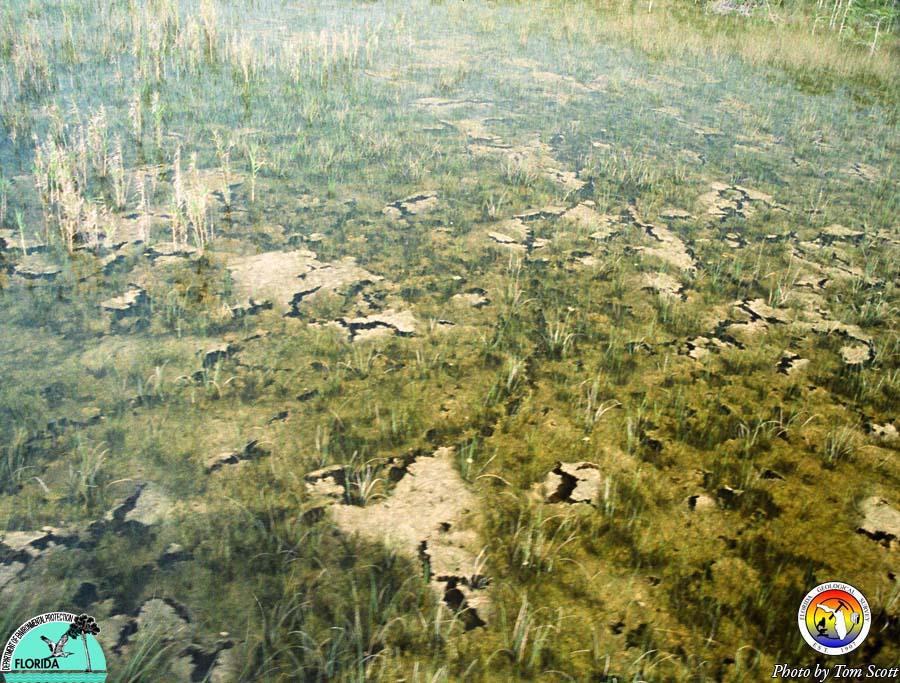 Everglades periphyton.jpg