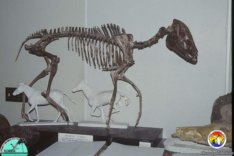 Fossil Horse.jpg