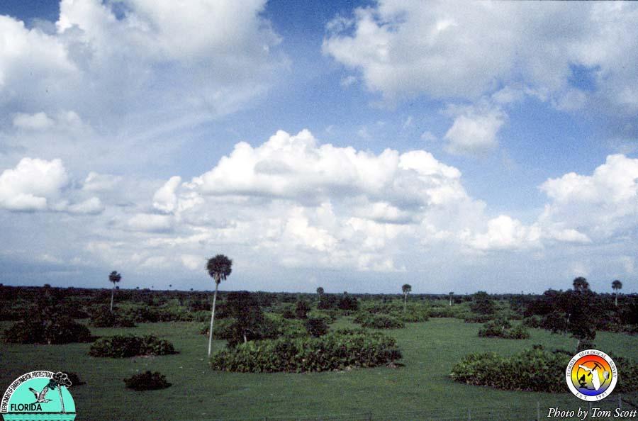 Okeechobee Plain.jpg