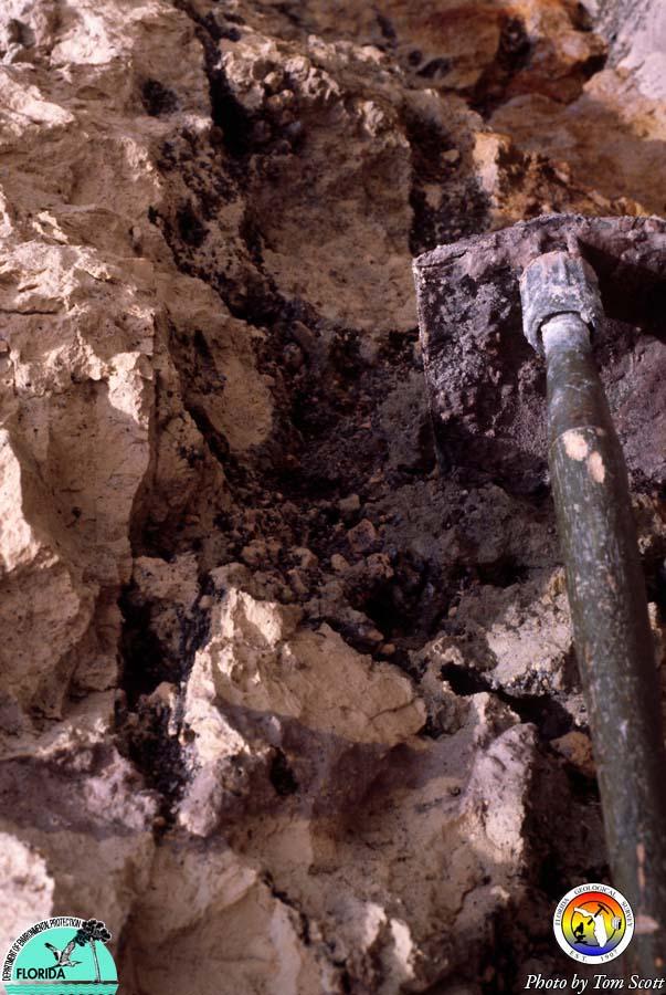Arcadia Fm Polk Co mine.jpg