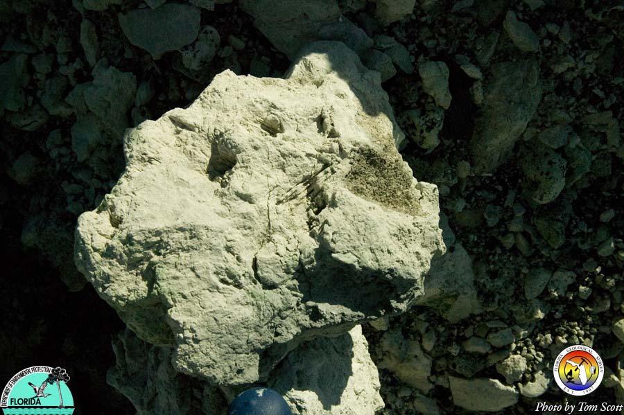 Arcadia Fm with gypsum molds.jpg