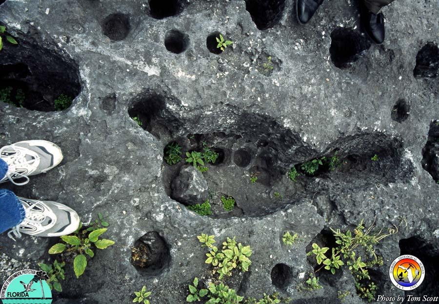 Miami Circle Holes3.jpg