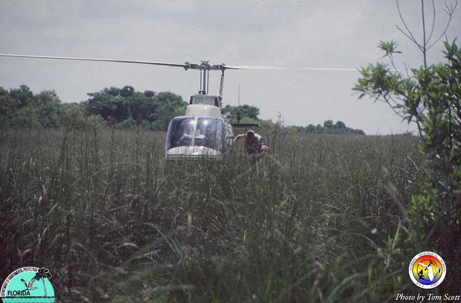 Helicopter in Everglades2.jpg