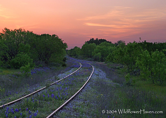 Sunset Bluebonnet Railroad