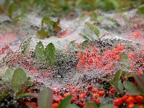 web on dew