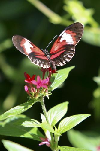 Butterfly World _001 .jpg