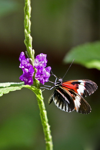 Butterfly World _002 .jpg